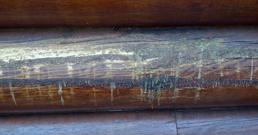 Sap Seeping From Sides of Finished Logs