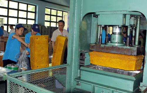 Các doanh nghiệp thuộc Tập đoàn Cao su Việt Nam đang đẩy nhanh việc cổ phần hóa. Ảnh: Phương Vy-TTXVN