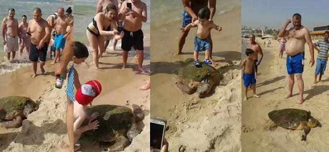 Sacan tortuga del mar para tomarse selfies, en un acto cruel