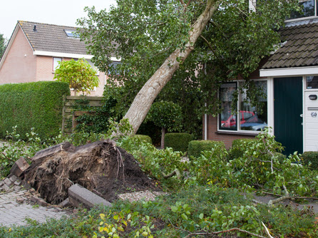 Key Tips To Know If You Have A Dangerous Tree In Your Backyard