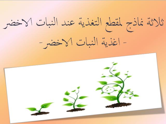 ثلاثة نماذج لمقطع التغذية عند النبات الاخضر- اغذية النبات الاخضر-
