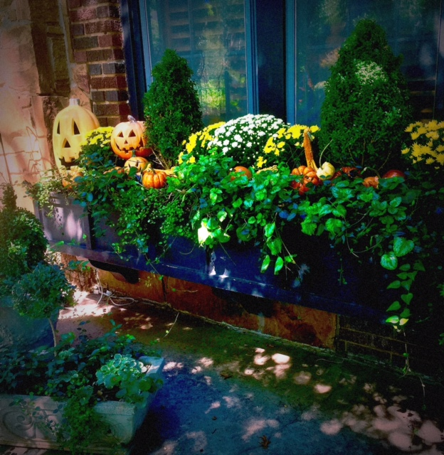 A bright, early fall example of how to style a window box with greenery, seasonal flowers and fruits of the season: gourds, pumpkins and jack-o-lanterns.