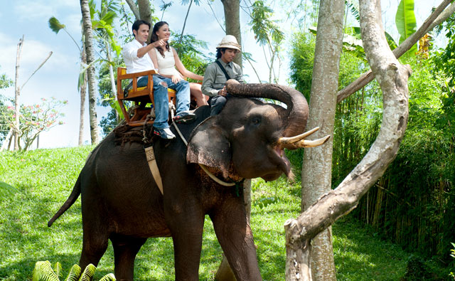 Bali Zoo Park Elephant Expedition - Singapadu, Sukawati, Gianyar, Bali, Zoo park, Program, Vacation, Trip, Tourist Object