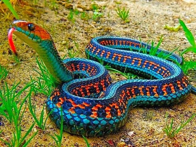 A cobras mais bonitas do mundo