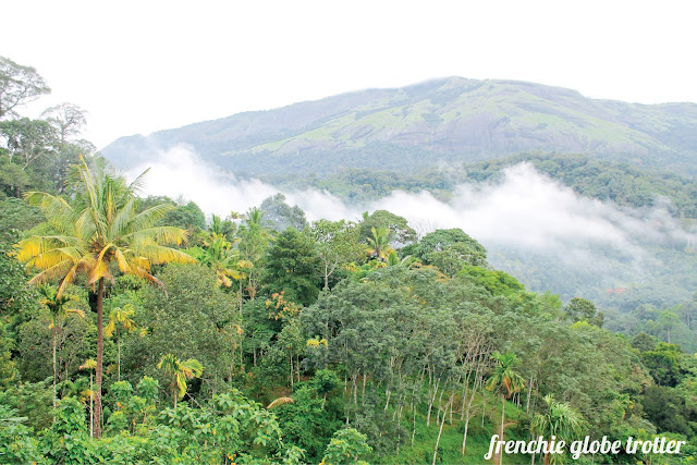 View of the valley from the Mistletoe Munnar Boutique Homestay, Munnar - Kerala