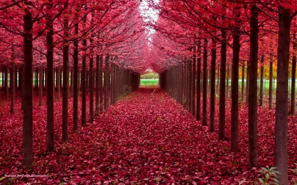 Cute Red Color Wallpaper Banco De Imagenes Y Fotos Gratis Arboles Hermosos 1