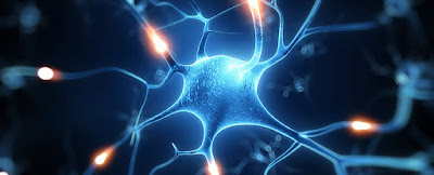 Scientists Research are Using Mobile Mitochondria to Repair Injured Nerve-Cells