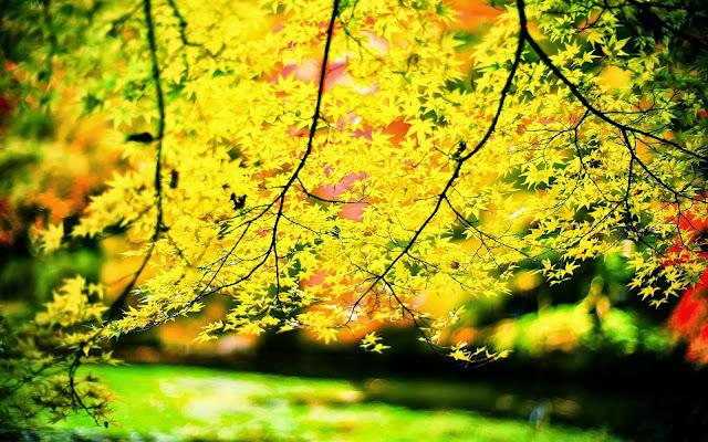 Takken met gele herfstbladeren verlicht door de zon