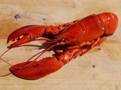 Peluang Bisnis Usaha Budidaya Lobster Air Tawar dengan Analisa lengkap