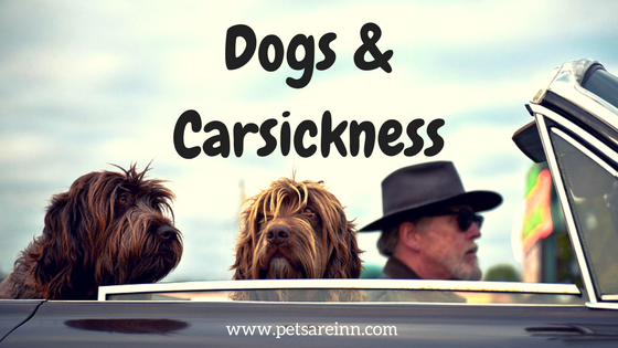 dogs carsick