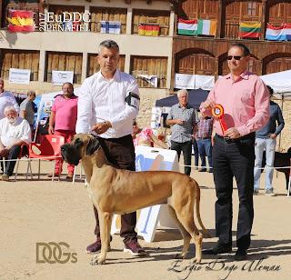 Dogo Aleman Dorado, Euddc