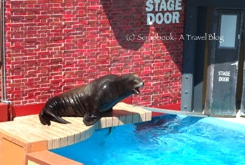 San Diego Sea World Sea lion Show