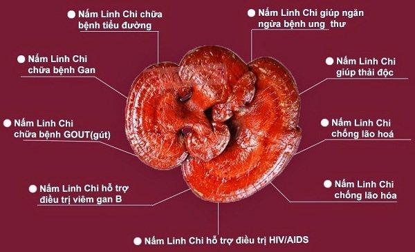 Công dụng của nấm linh chi chữa bệnh như thế nào