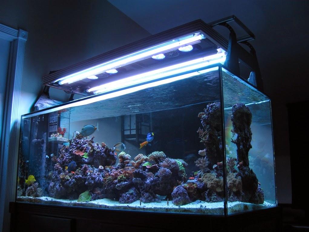 LED and T5 Hybrid My Ultimate Lighting System & LED and T5 Hybrid: My Ultimate Lighting System - Marine Depot Blog azcodes.com