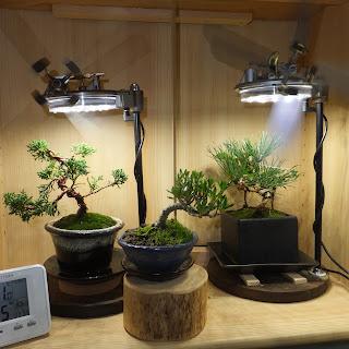 植物鑑賞スタンドで育てる盆栽