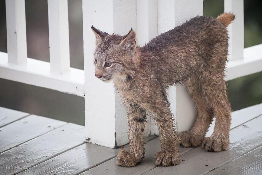 We All Want To Wake Up Finding What This Man Discovered On His Porch