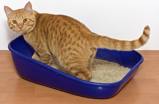 Cara Mencegah Kucing Buang Kotoran Sembarangan
