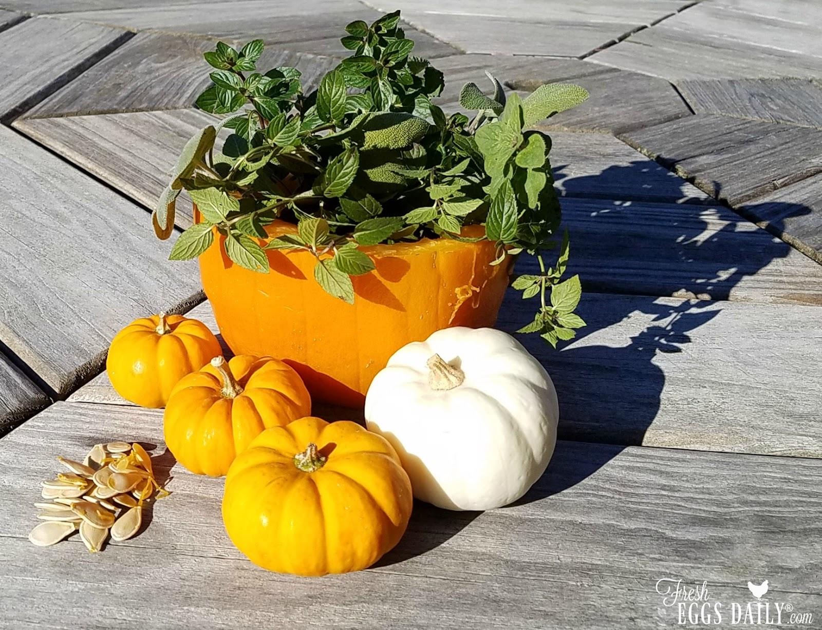 Using Pumpkins, Garlic & Nasturtium for Worming Chickens