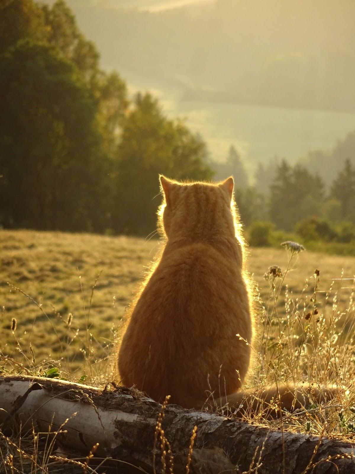 Eben otevřené kočička obrázky