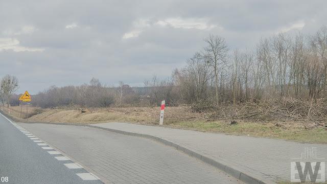 Wycinka drzew pomiędzy Żninem a Szubinem