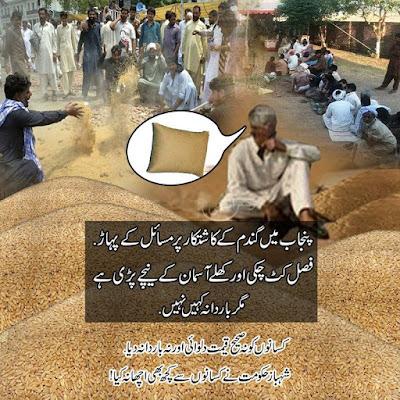 پنجاب میں گندم کے کاشتکار پر مسائل کے پہاڑ.