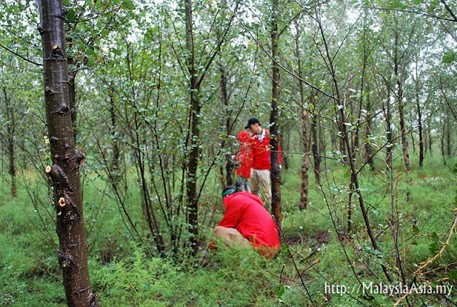 Mongolia Timberland Tree Planting