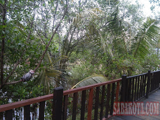 Ekowisata Bakau Wonorejo wisata alam tempat wisata surabaya jalan-jalan hutan bakau mangrove surabaya www.sabakota.com