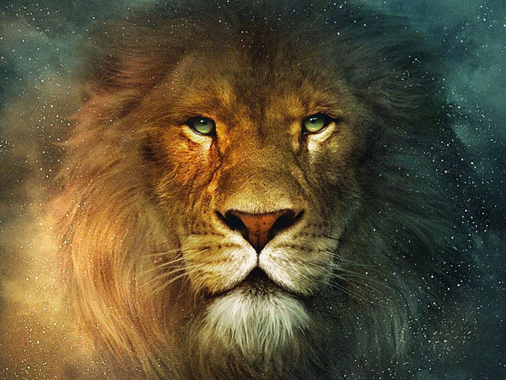 Wallpaper collections lions wallpapers - Lion wallpaper ...