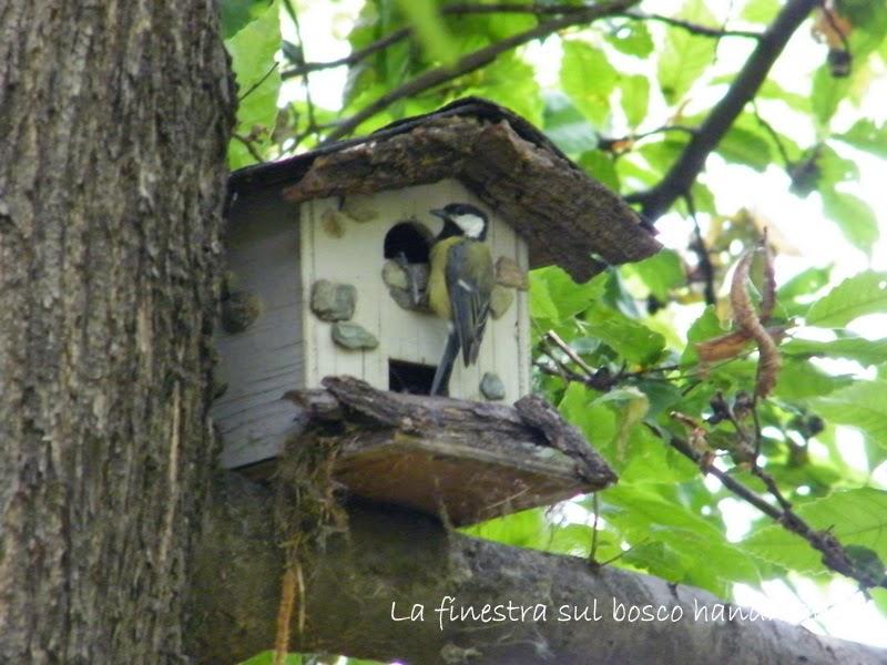 La finestra sul bosco handmade casette uccellini fai for Casette per conigli fai da te