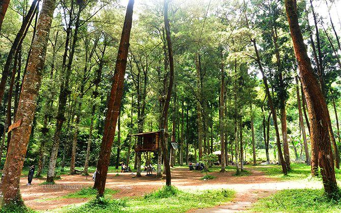 Salah satu rumah pohon di Ledok Ombo