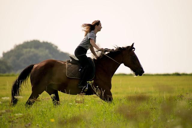 Jak nauczyć się wydłużania i skracania chodów konia?