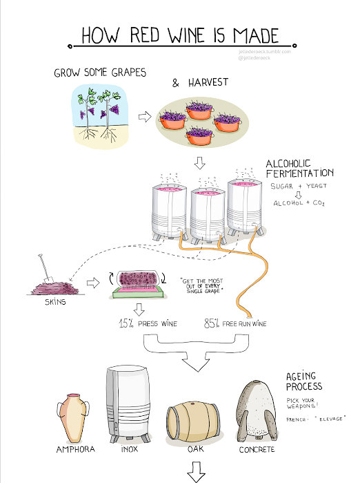 Ever Wonder How Red Wine is Made?