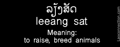 Lao Word of the Day:  To Raise, Breed Animals - written in Lao and English