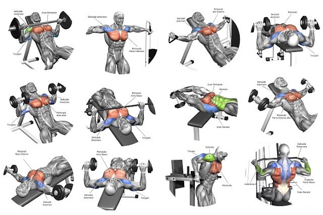 Image Result For Lower Chest Workouta