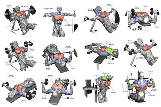 5 Tips For the Best Chest Workout - شبكة الهتاري