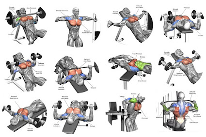 Muscle Building Exercises - Community - Google+