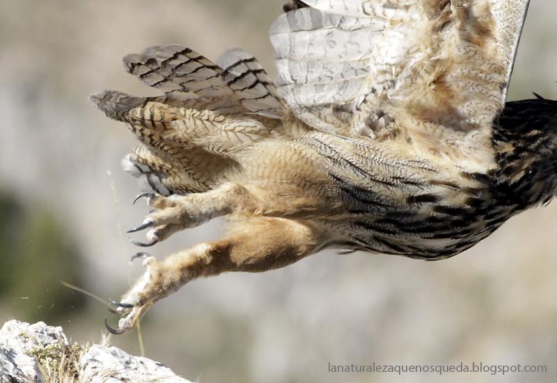 87+ Gambar Arsir Fauna Terlihat Keren