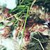 Kanibal Bukan Sifat Alami Kelinci