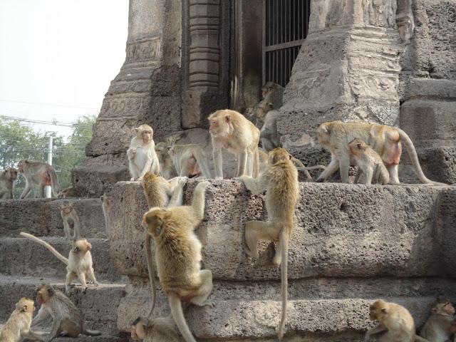 Wat Phra Prang Sam Yod,  Ayutthaya, gare, bangkok, lopburi, phitchanulok, singe, temple, Thaïlande, train