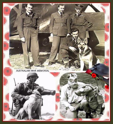 Oorlog hond, dog war, chiens de guerre, messenger, ambulancier, medical, ужасы войны, 戦争の犬たちdepistage, 1914, mondiale, 18, yser, ambulance dogs, Iron Cross, Red Cross dogs, World War