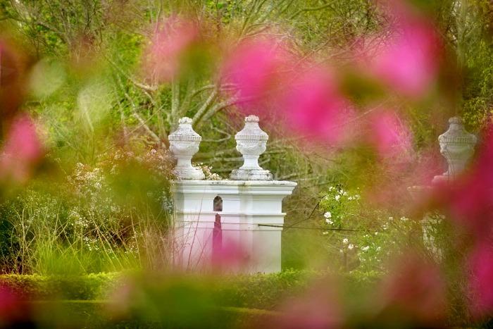 Stellenberg Gardens, puerta y buganvilla rosa