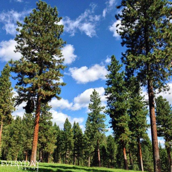 Montana travel report - Everyday Living Blog