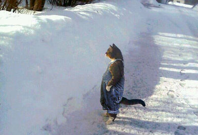 Photoshopped Cat picture • Funny cat standing up in snow looking at something very interesting