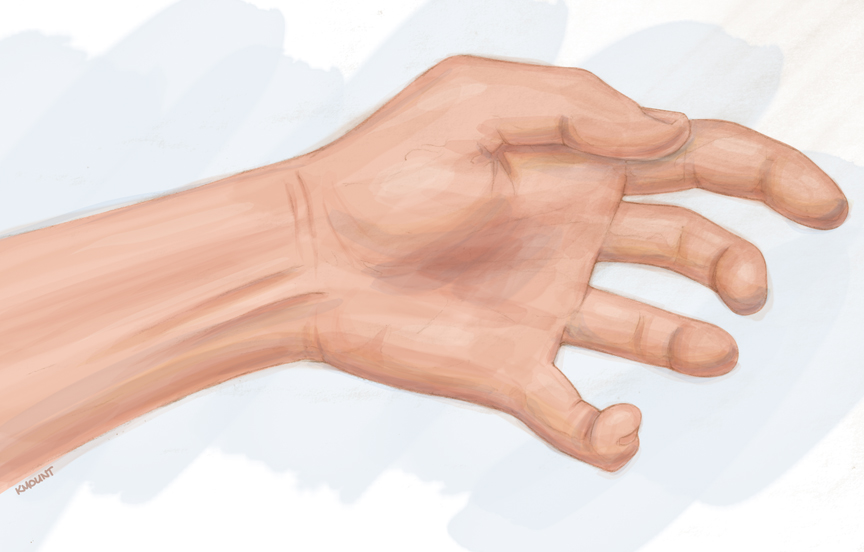 palmar hand muscle anatomy diagram calibre thermo fan wiring human for the artist ventral forearm what are those