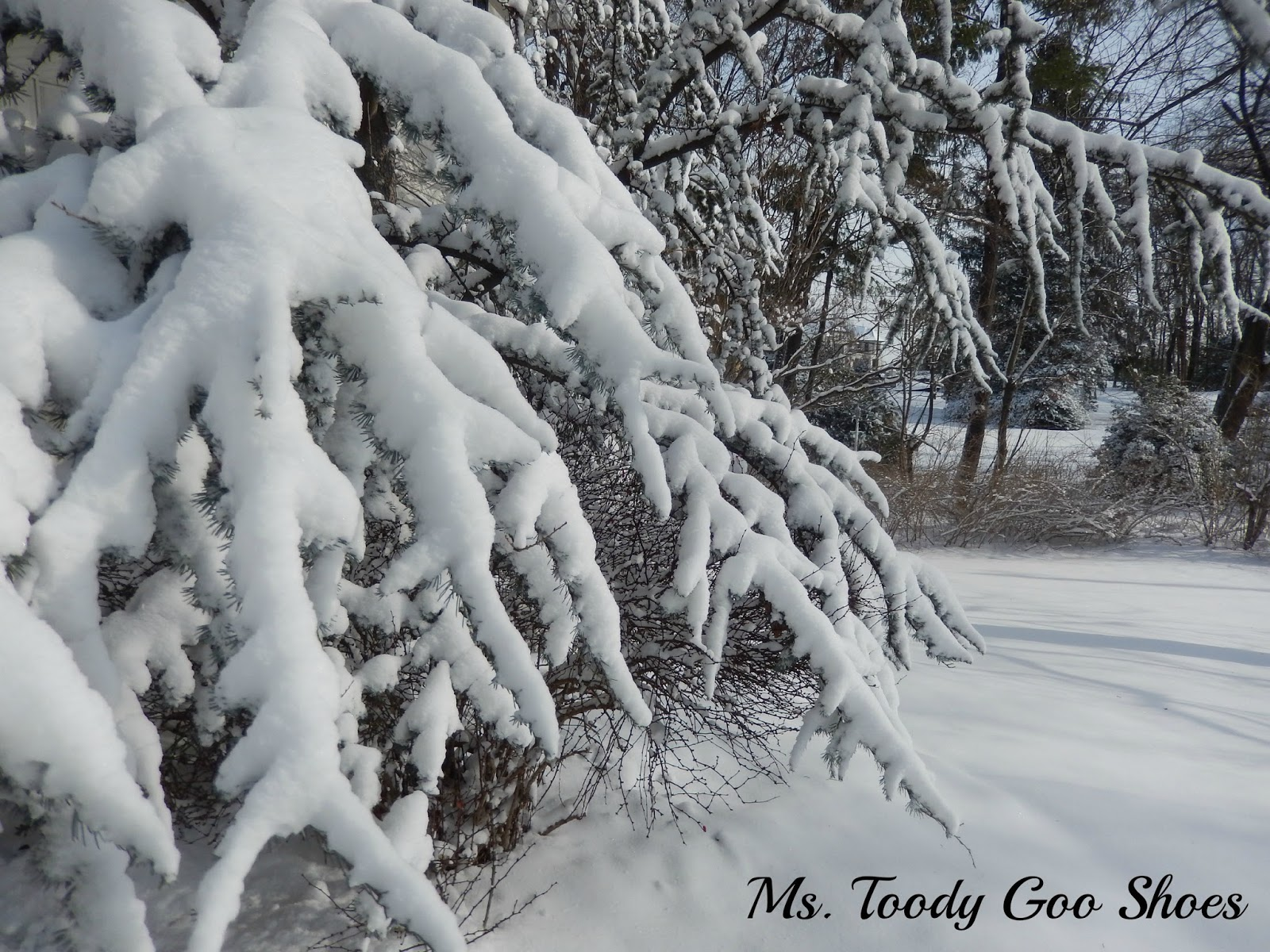 Snow Day --- by Ms. Toody Goo Shoes