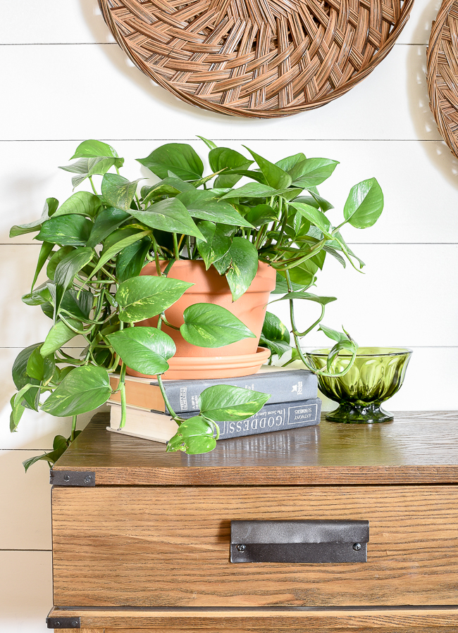 Add houseplants for spring