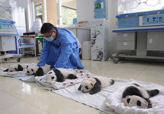 Children panda #2