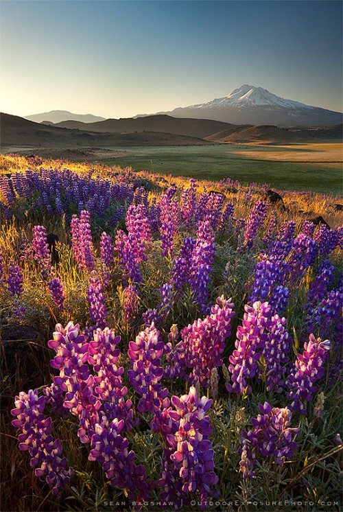 صور طبيعية خلابة جميلة وحلوة