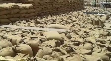 किसानों की धान अमानक बताकर करोड़ों का भुगतान रोक दिया | MP NEWS
