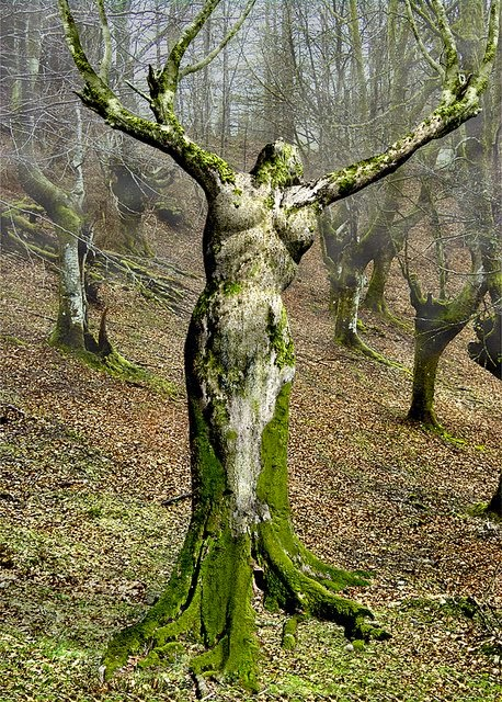 Mother Nature Tree Optical Illusion | Genius Puzzles